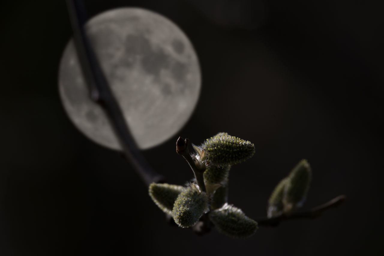 Night and day with blurred full moon Blurry Background Catkins Close-up Day Focus On Foreground Focus On Foreground,shallow Focus Freshness Full Moon Montage Photography Nature Nightmoon No People Outdoors Twig
