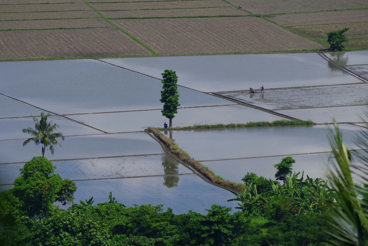 Rice Fields And Water High Angle View Birdseyeview Agriculture Tree Beauty In Nature No People Eyeem Philippines Kulotitay Clicks The Great Outdoors - 2017 EyeEm Awards