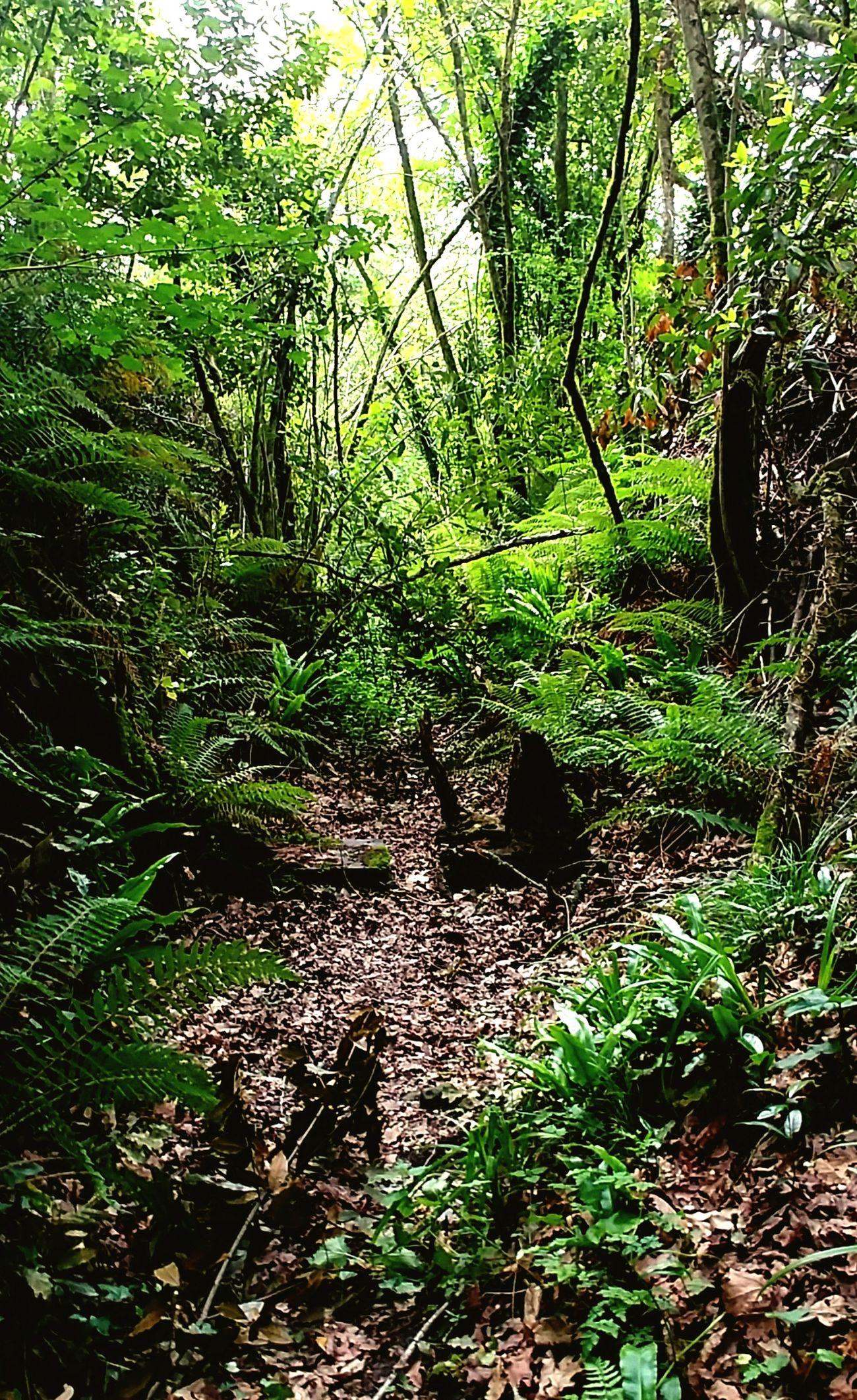 Forest Vizcaya Abadiño
