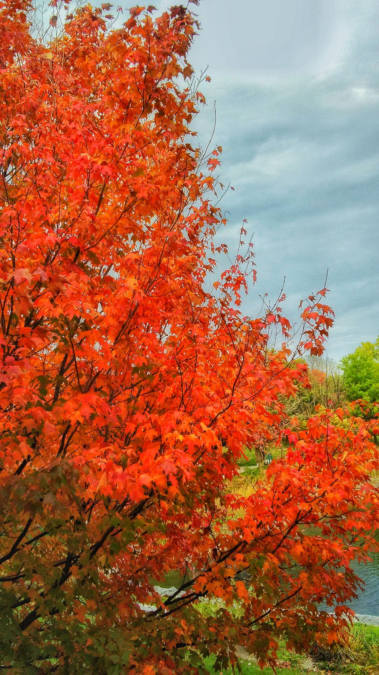 Nature Tree Orange Color Growth Sky Beauty In Nature Red Change No People Outdoors Day Cloud - Sky Close-up Freshness Water Single Tree