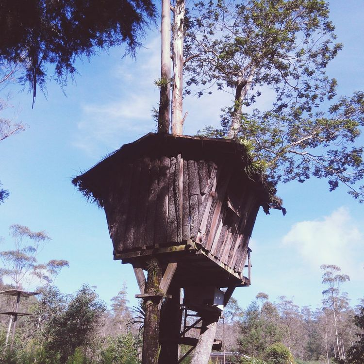 Tree house! I wanna have it in my backyard, someday.