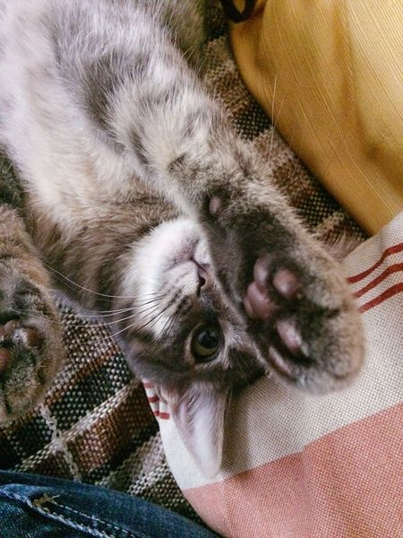 Pet Portraits Pets Cat Domestic Cat High Angle View Portrait Looking At Camera