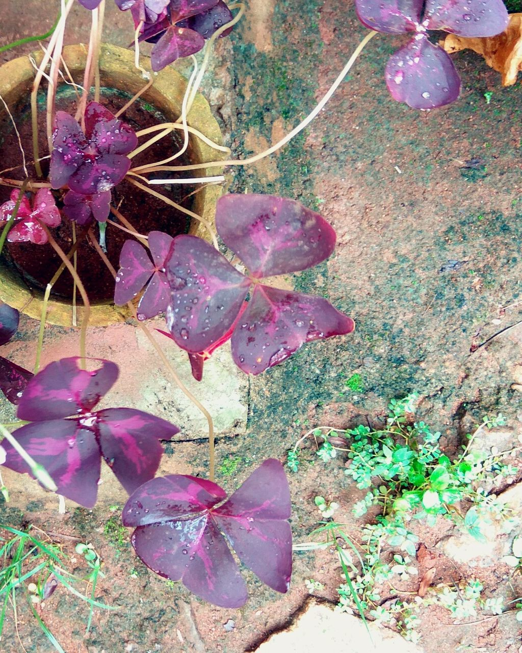 growth, nature, plant, leaf, beauty in nature, purple, no people, outdoors, fragility, flower, day, autumn, close-up
