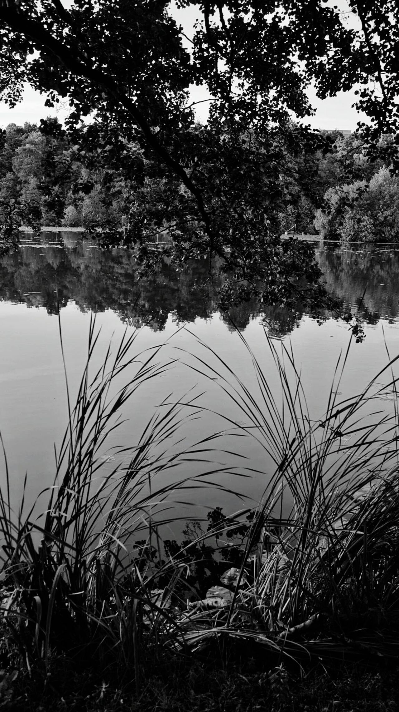 Shades Of Grey blackandwhite Nature Nature_collection