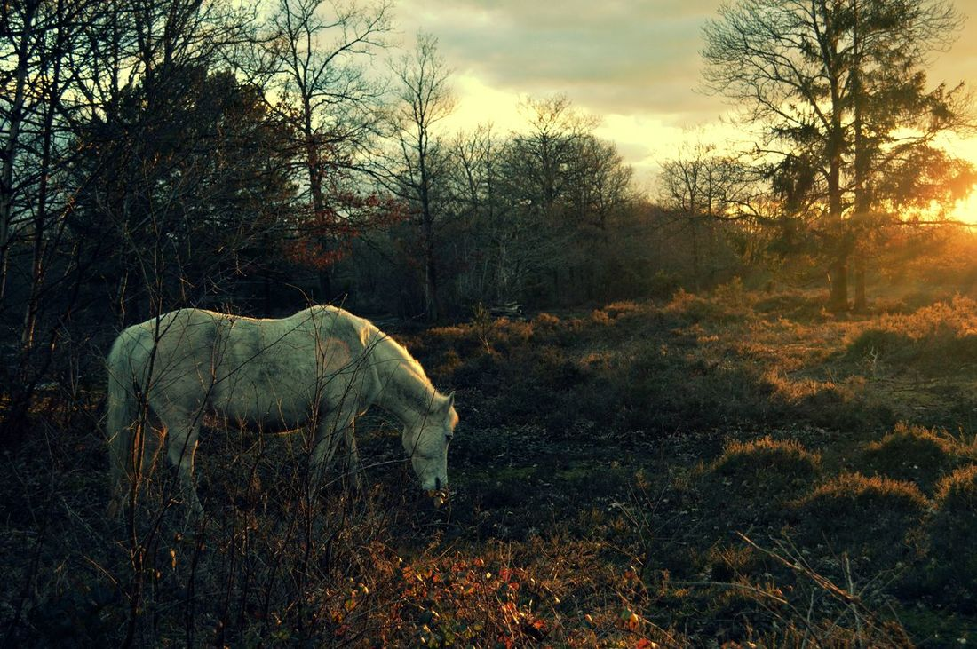 Nature Nature_collection Natural Beauty Peace And Quiet England Horse Pony White Horse White Pony Forest WoodLand Grazing Trees Magical Magical Forest Peace Sunset Grass Winter Dream Unicorn Countryside Country Life Things I Like Beautiful Horse