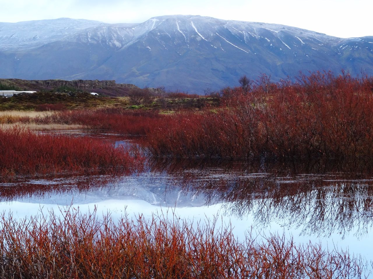 Nature Mountain Beauty In Nature Scenics Tranquil Scene Landscape Tranquility Field Growth Water No People Outdoors Day Water Reflections Grass Red Grass Lake Thingvellir Thingvellir National Park Iceland