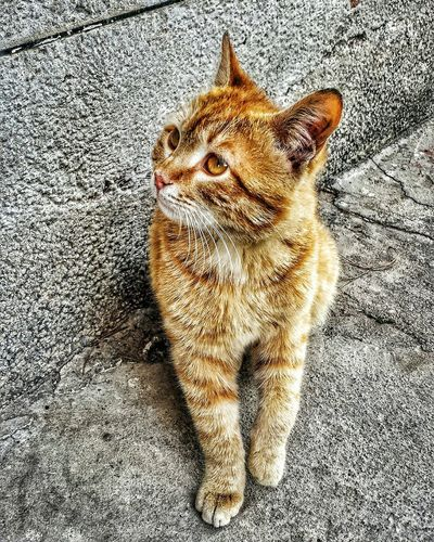 Lovely Cat Cat Animal Love Animals Animal Animallovers Cat Lovers Cat♡ Photography Catslover Nice