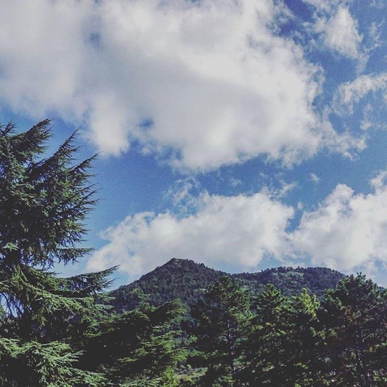⚪ Gubbio Umbria Italia Italy Igersumbria Igersitalia Liveloveitalia Trees Leaf Leaves Evergreen Nature Naturelovers Natura Sky Skylovers SkyClouds Clouds Cloudslovers Cloudscape Landscape