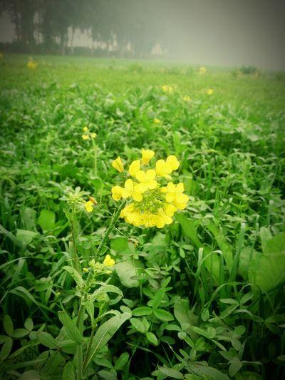 Beauty of My farm