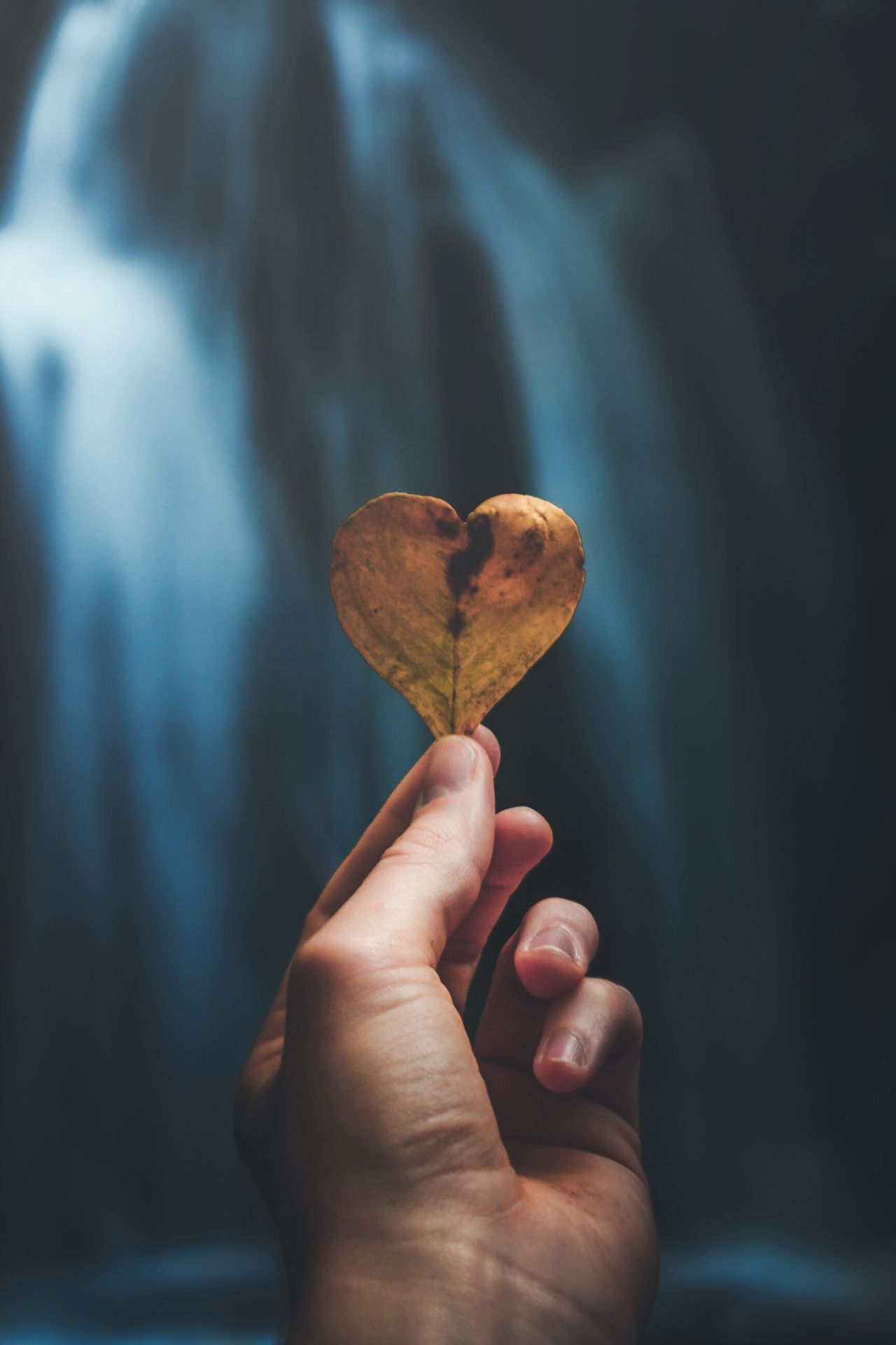 Human Hand Human Body Part Holding Human Finger One Person Close-up Fingernail Adult Day Young Adult Focus On Foreground Real People EyeEm Best Shots EyeEm Gallery Beautiful EyeEm Love Leaf Flower Autumn Nature Water Blue Moody The Great Outdoors - 2017 EyeEm Awards