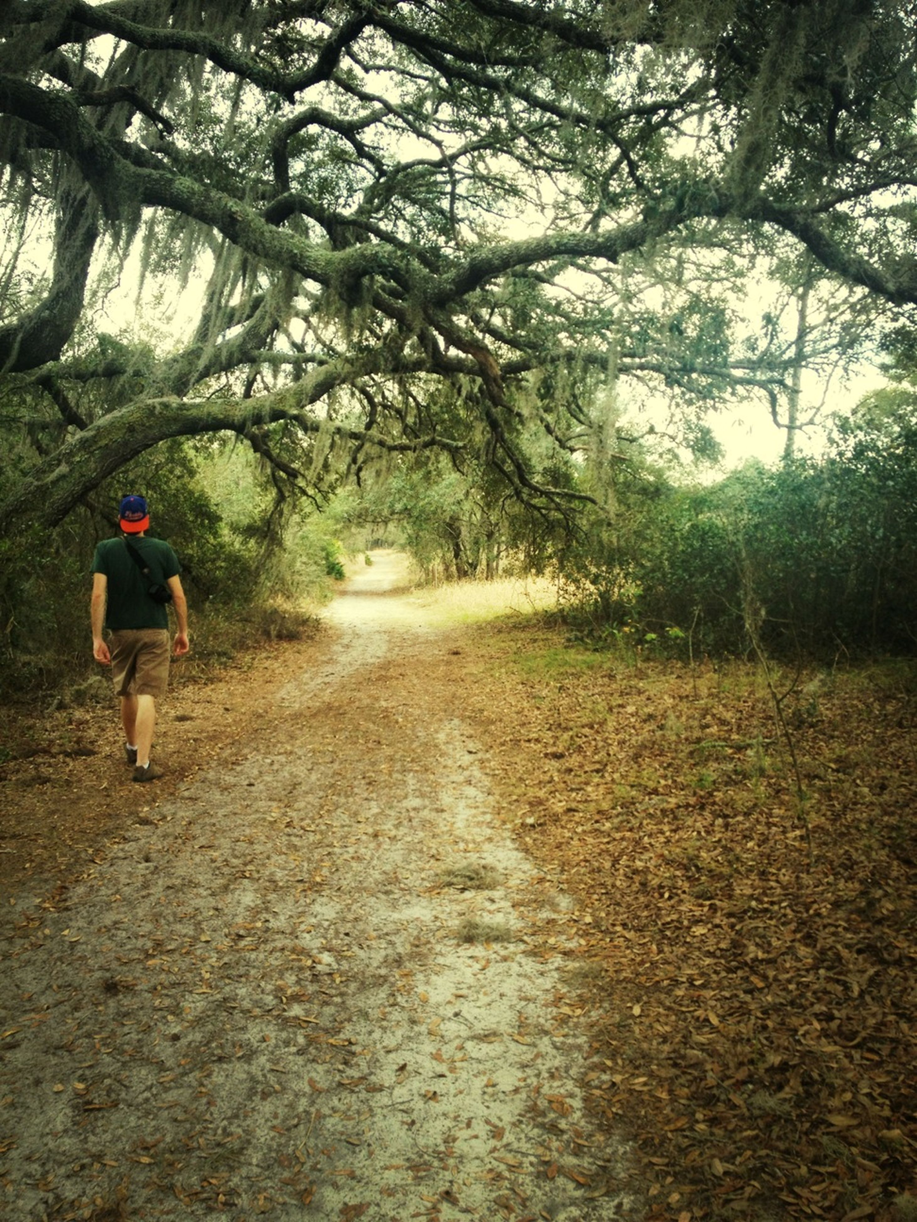 tree, lifestyles, the way forward, full length, leisure activity, rear view, walking, men, person, dirt road, casual clothing, nature, footpath, day, growth, tranquility, outdoors