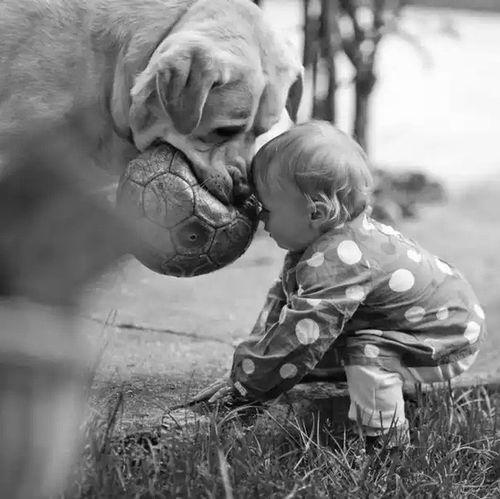 Dog Dogs Dog❤ DogAndChild