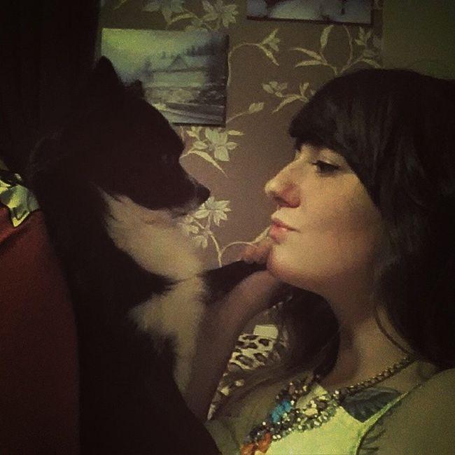 Poopoo Chihuahua Lovemydog Instadog Dogsofinstagram Badsideprofile Hatemynose Doggykisses
