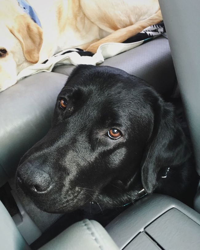 Backseat Driver Adventure Buddies Dog