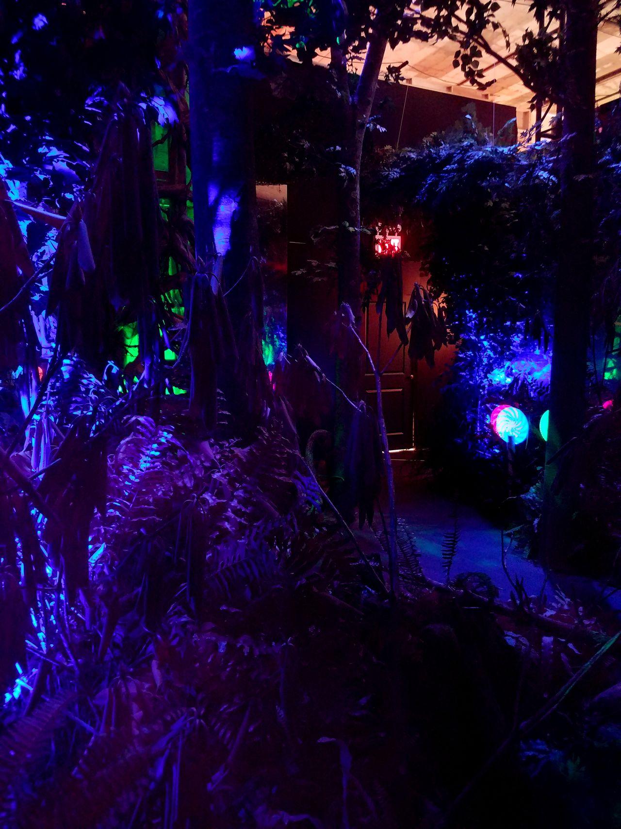 The Magician Indoors  Tree Illuminated Night