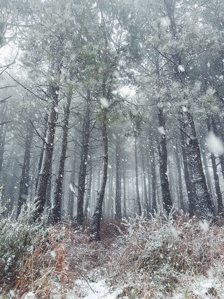 bosque nevado Monte Bosque Invierno Nature Naturaleza Nieve Backgrounds Full Frame Window Close-up Indoors  Abstract