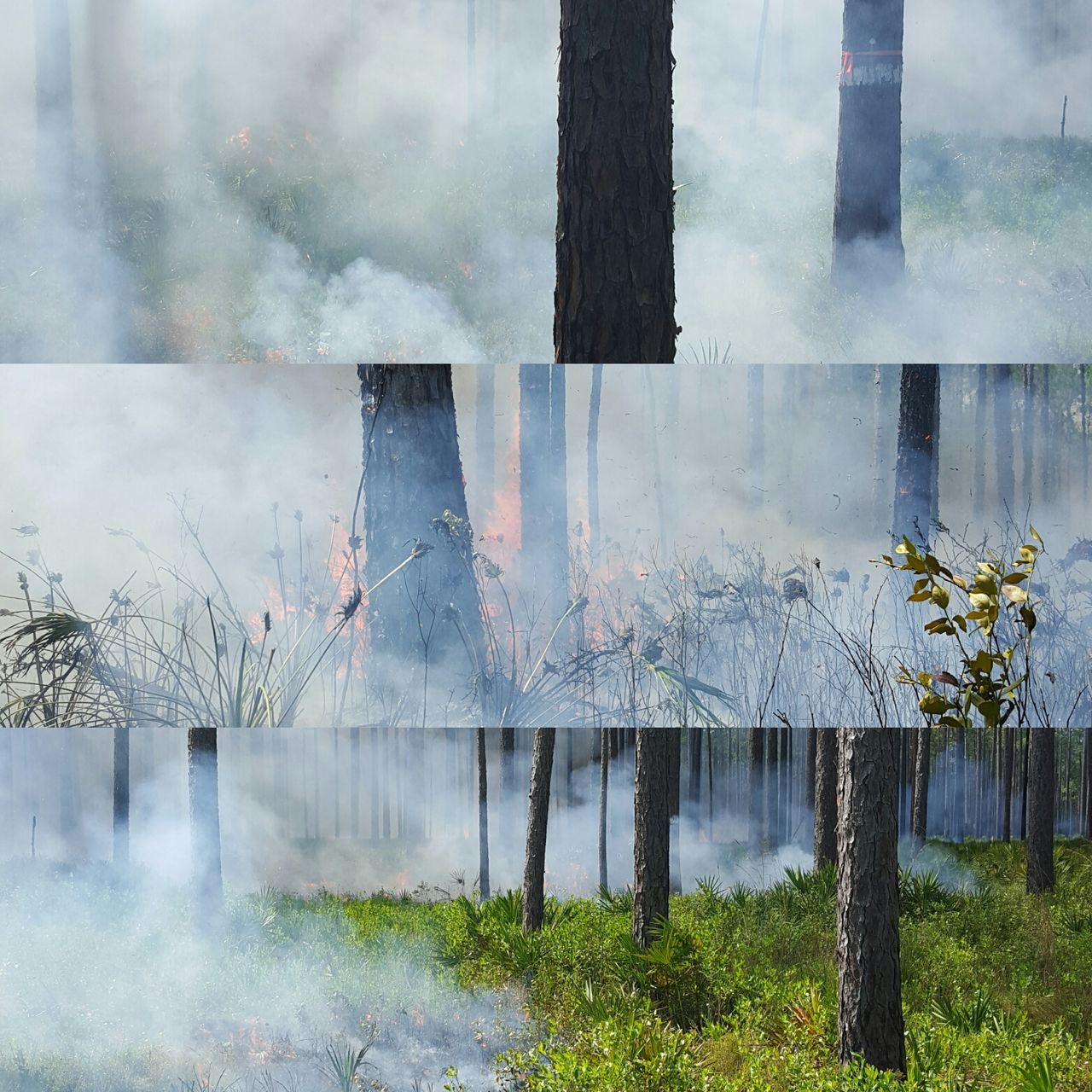 Multiple Shots Of Fire In Forest