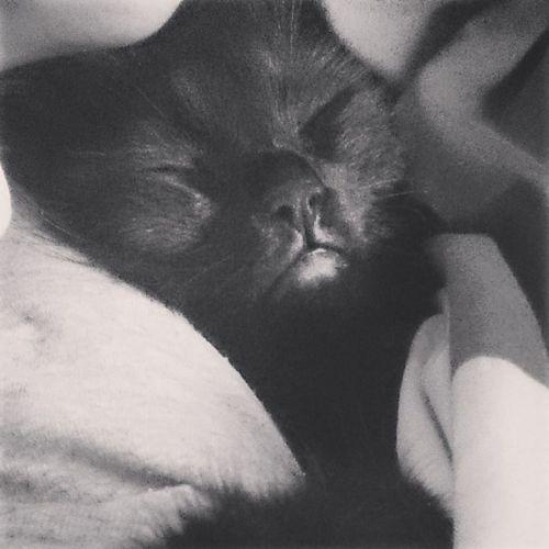 Cat Sleep Black Photo