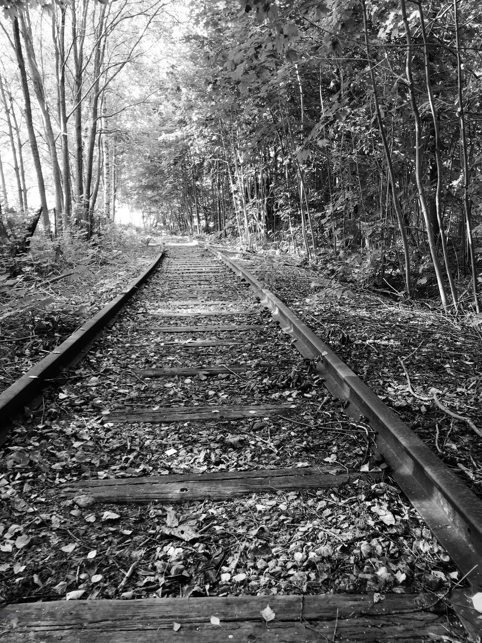 tree, railroad track, rail transportation, nature, transportation, tranquility, no people, forest, day, tranquil scene, the way forward, beauty in nature, outdoors, scenics, railroad tie, branch