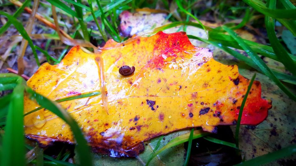 Nature Macro Photography Mobile Photography Popular Photos Nature Photography Leaf 🍂 Przyroda Природа Snail🐌 Mobile Artist