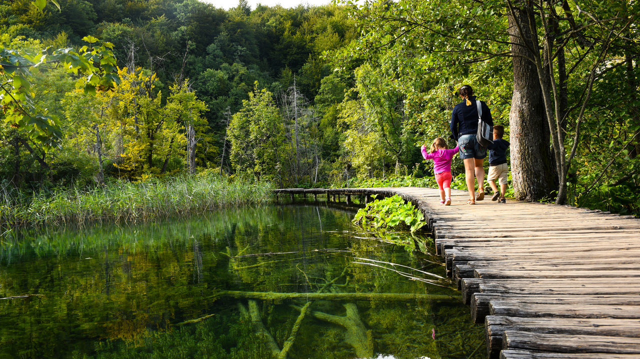 full length, lake, tree, water, nature, outdoors, day, one animal, growth, forest, beauty in nature, real people, one person, childhood, pets, footbridge, animal themes, mammal, people, adult