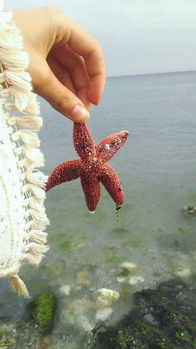 Sea And Sky Gokyuzu Yıldız Deniz Denizyıldızı Sea Sky Tumblr First Eyeem Photo