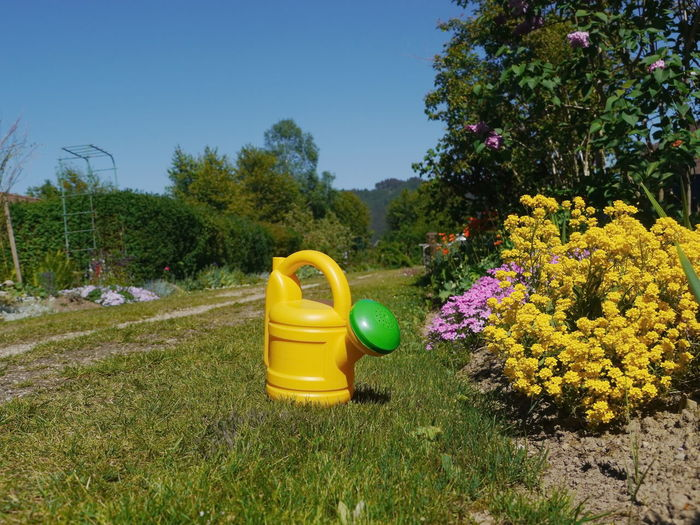 Agriculture Change Day Field Flower Flowers,Plants & Garden Garden Gardening Grass Grassy Green Green Color Growing Growth Meadow Outdoors Plant Relaxing Moments Rural Scene Summer Water Watering Watering Can Wateringcan Yellow
