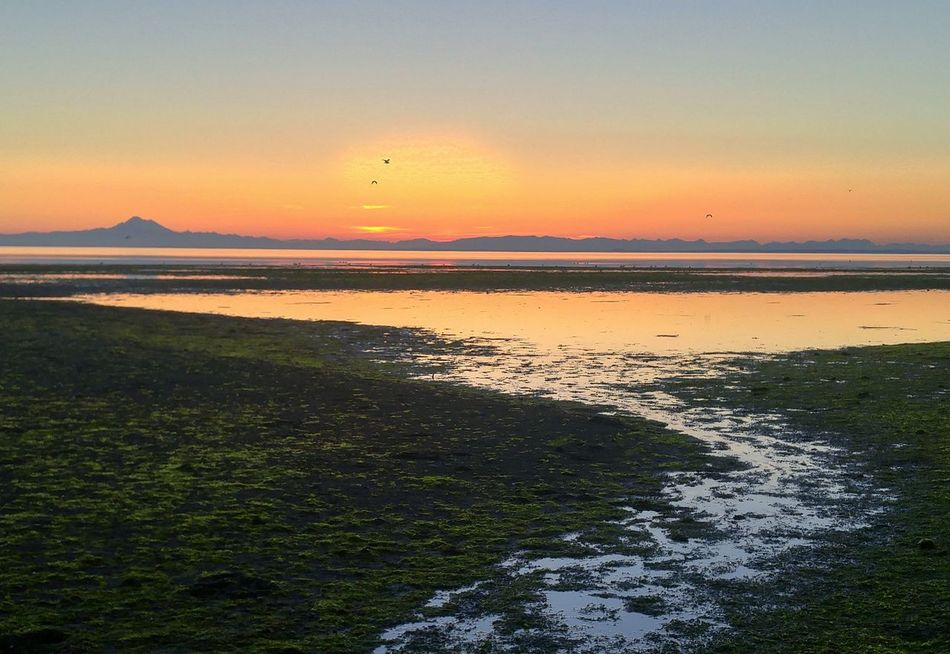 Check This Out Sunrise at Three Crabs Beach, Low Tide with Mt. Baker in the distance. Sequim, WA Sequim Washington State PNW Beauty In Nature Eye 4 Photography EyeEm Best Shots Landscape Seascape Idyllic Calm Quiet Catch The Moment Peaceful. EyeEm Nature Lover Sun Glow Natural Colors Beauty Of Nature Strange Landscape Otherworldly