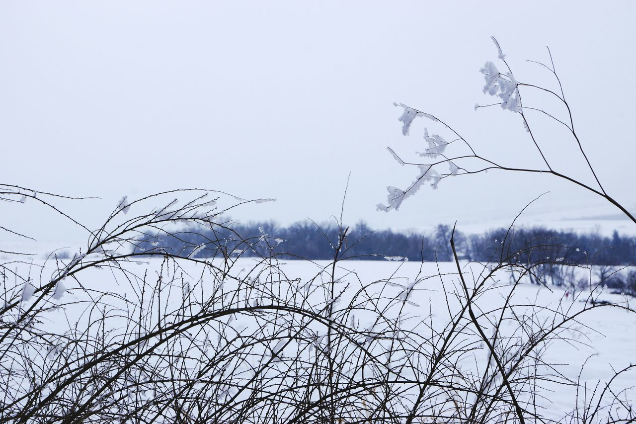 nature, winter, cold temperature, bare tree, outdoors, beauty in nature, tranquility, tranquil scene, no people, day, snow, lake, plant, scenics, branch, tree, water, clear sky, sky, bird, animal themes