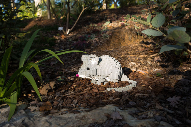 Lego sculpture at the natural Lego habitat :D Autumn Awarness Creative Creative Light And Shadow Creativity Environment HUMANITY Leaf LEGO Mouse Nature Nature No People Outdoors Photos That Will Restore Your Faith In Humanity Plant Rodent Sculpture Textured