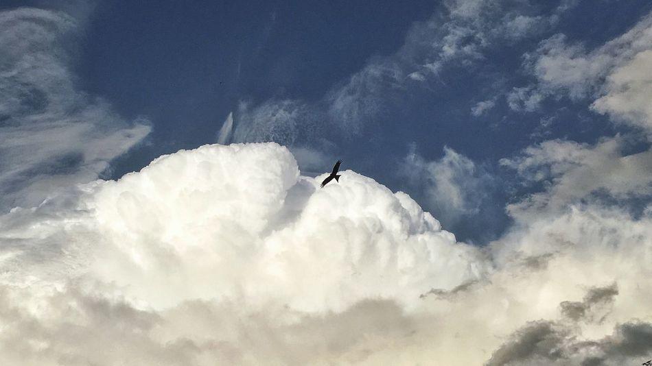 Hello World Taking Photos Interesting Perspectives Nature Photography Flying Home Himmelskunst Himmel Und Wolken Birds