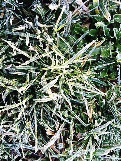 Grass Frosty Mornings Cold As Ice Frosty Garden & Nature Nature Garden Winter Mornings