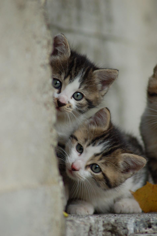 Beautiful stock photos of baby katzen, Animal Themes, Behind, Close-Up, Day