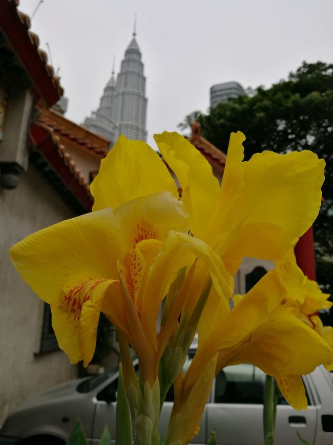 Yellow Flower KLCC Tower Background Defocus