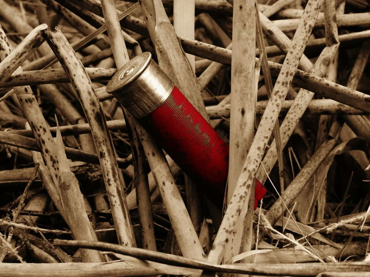 Red Metal Wood - Material No People Close-up Outdoors Day Hunting Shotgun Shells Birddog