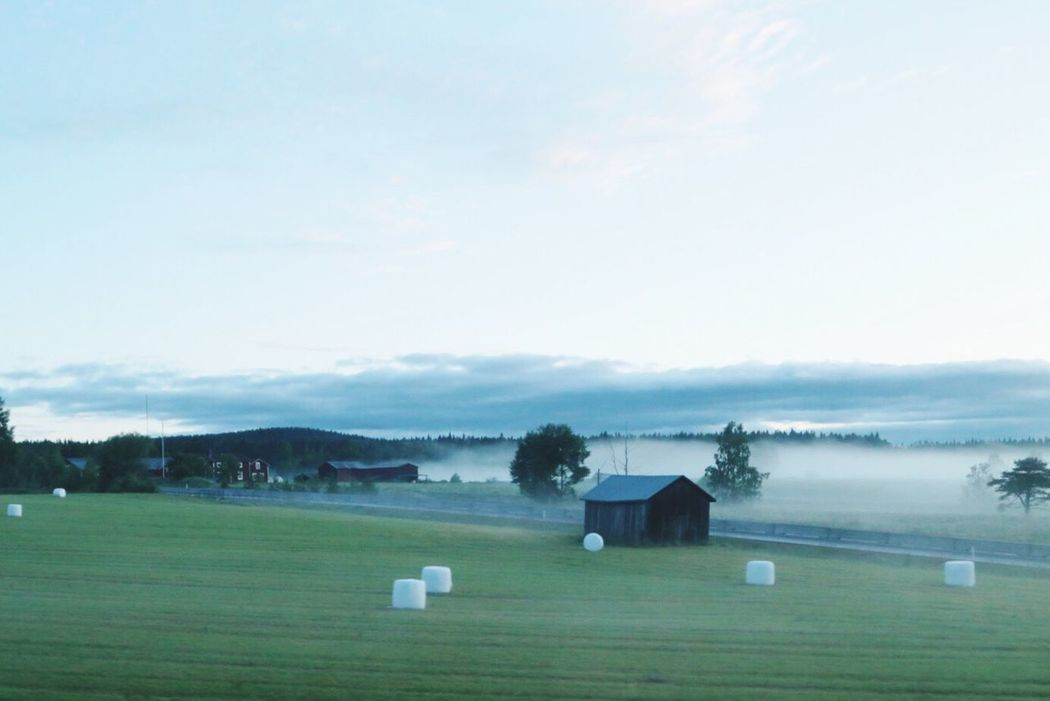 Cottage Life Fog Farmhouse Silent Landscape Misty Morning Meadow Tranquil Scene Naturephotography Artistic Photo Foggy Mist Misty Barn Tranquility Calm Countryside Life Hay Mow Landscape_photography Artphoto Farm Life Farmlife Early Morning Silence Nature_collection