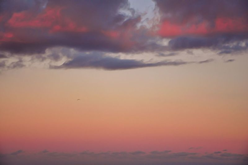 Pastel Sky Pastel Colors Pastel Clouds Sky_collection Sky Clouds And Sky Serene