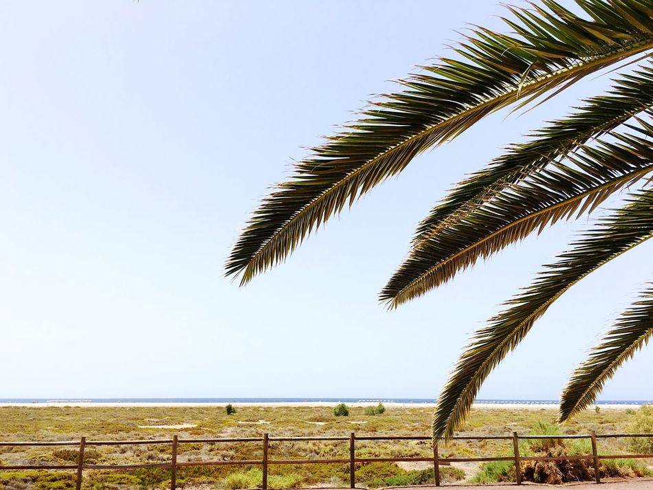 Palm Tree Clear Sky Nature No People Outdoors Growth Beauty In Nature Scenics Tranquility Day Tree Tranquil Scene EyeEm Non-urban Scene EyeEm Best Shots EyeEm Nature Lover Outdoor Photography Beauty In Nature Tranquility Water Sand (null)Nature Sunlight Horizon Over Water