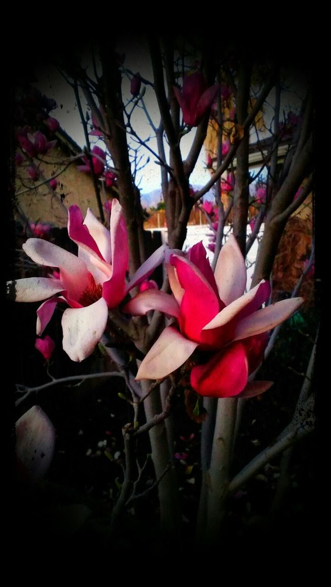 Life is beautiful. This Is My Story Flowers Nature
