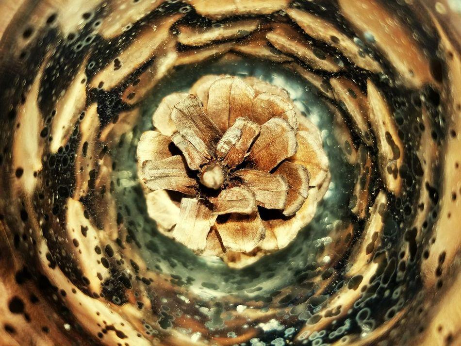 Pinecombs/glass,Glassworks,nature, swirls, lines, dots,artwork