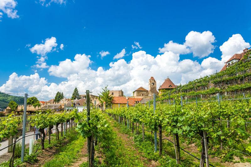 Dürnstein, Wachau Austria Danube Donau Kellerschloss Kellerschlössl Nature Wachau Domaine Dürnstein Landscape Old City Region Village Weingut Wine Wineyard