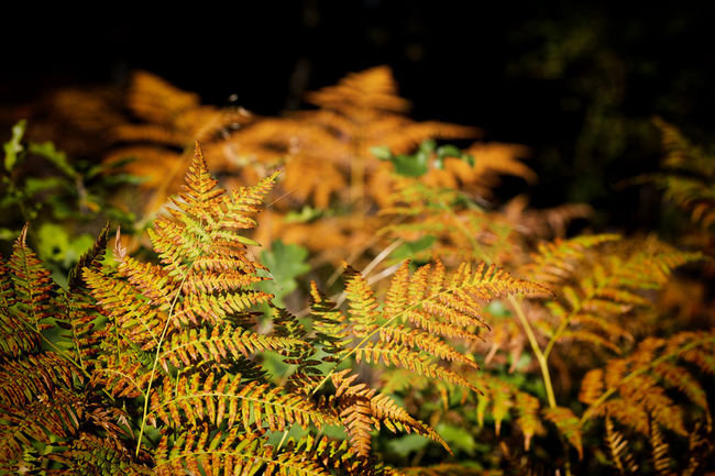 Autumn Colors Beauty In Nature Bracken Close-up Drastic Edit Exceptional Photographs EyeEm Best Edits EyeEm Masterclass Fern First Eyeem Photo Focus On Foreground Fragility Full Frame Hello World Leaf Light And Shadow Lights And Shadows Nature Plant Life Scenics Selective Focus Tranquility Vibrant Colors