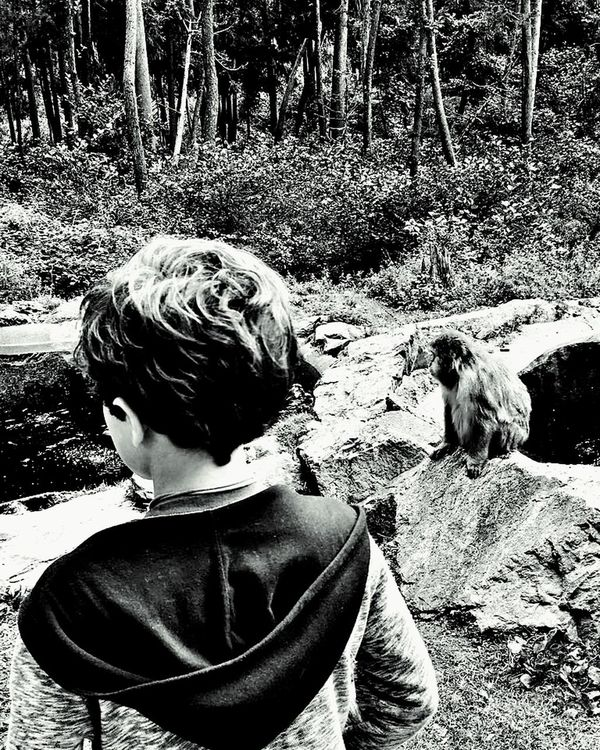 Forest Leisure Activity Headshot Rear View Childhood Tree Nature Outdoors Beauty In Nature Vacations Black And White Photography BW_photography Bw_shotz Blackandwhite Black & White Wanderlust Bw_society Bwphotography Bw_collection Bw_photooftheday Monkey Japanese Macaque Affenberg Landskron Monochrome Photography Black And White Friday