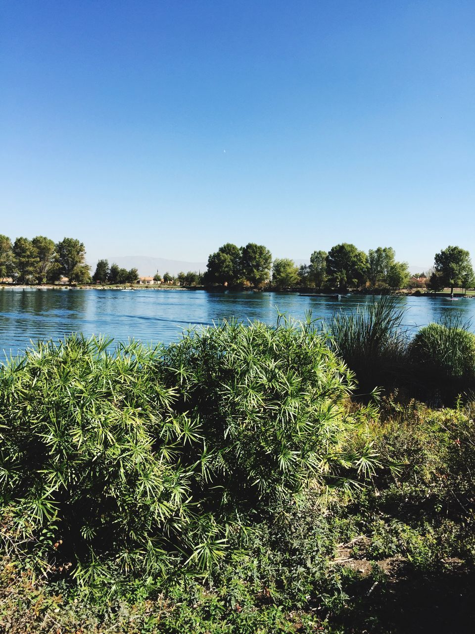 nature, plant, water, scenics, beauty in nature, lake, tranquil scene, tree, growth, clear sky, outdoors, no people, tranquility, day, green color, landscape, sky, grass