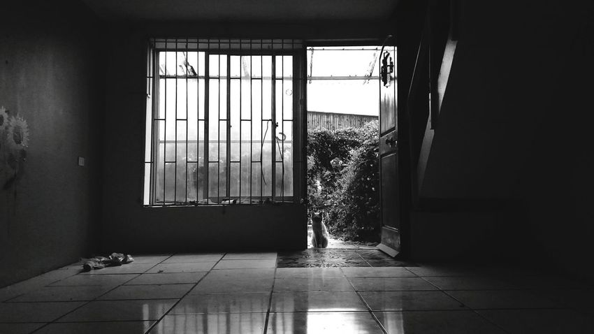 Window Indoors  Domestic Room Home Interior No People Abandoned House Abandoned Pet