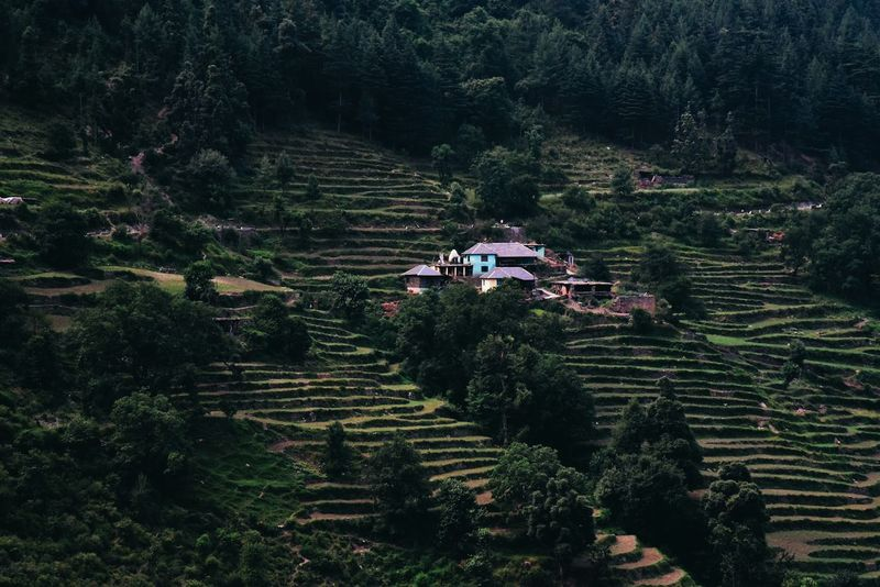 The Great Outdoors - 2017 EyeEm Awards Agriculture Tree Field High Angle View Farm Growth Outdoors Rural Scene Terraced Field Landscape Plant Nature Tranquility Scenics No People Beauty In Nature Day Rice Paddy Lush - Description Architecture
