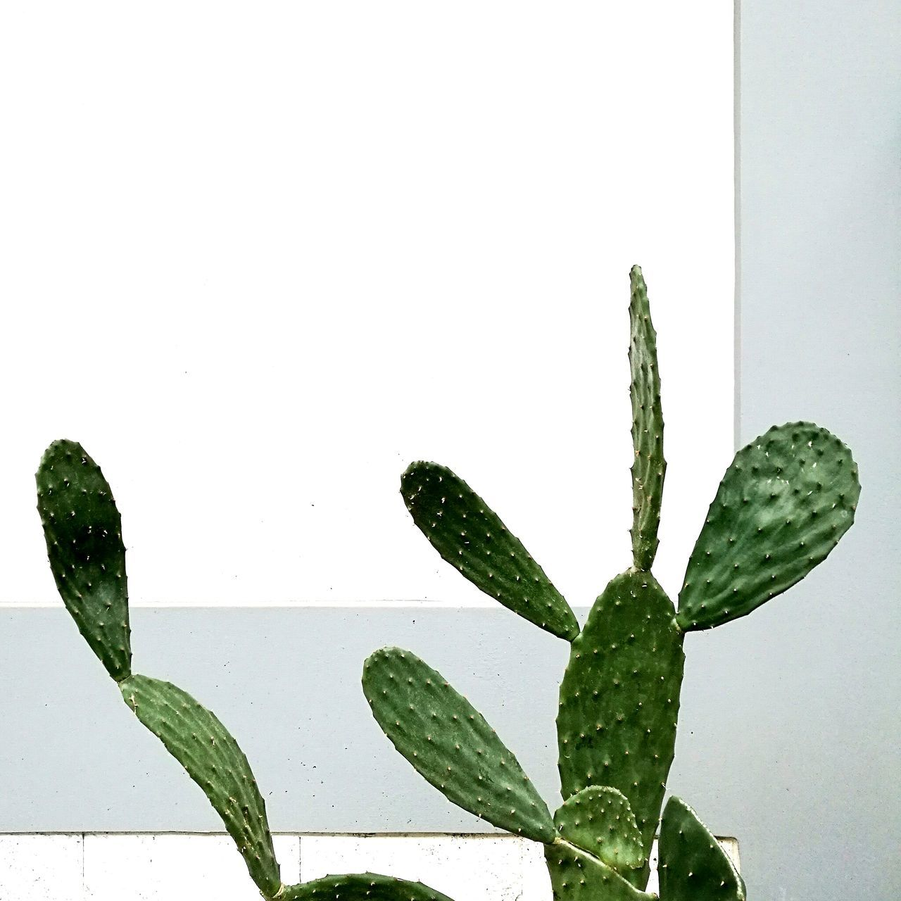 Minimal. Green Color Leaf Vegetable Nature Plant Growth Day Close-up Freshness No People
