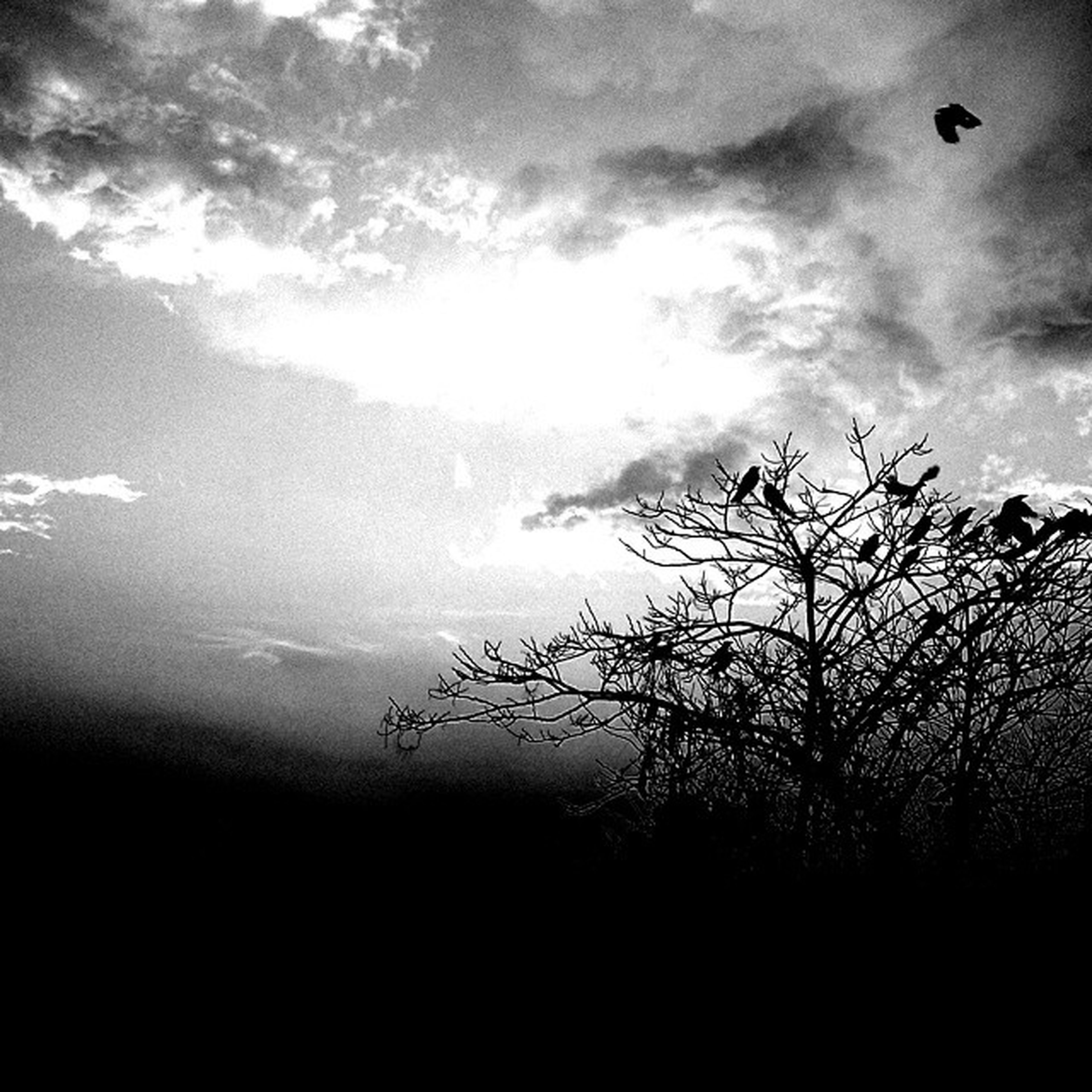 silhouette, sky, tranquility, tranquil scene, scenics, beauty in nature, tree, nature, cloud - sky, low angle view, idyllic, cloud, cloudy, sunset, branch, outdoors, sun, no people, growth, non-urban scene