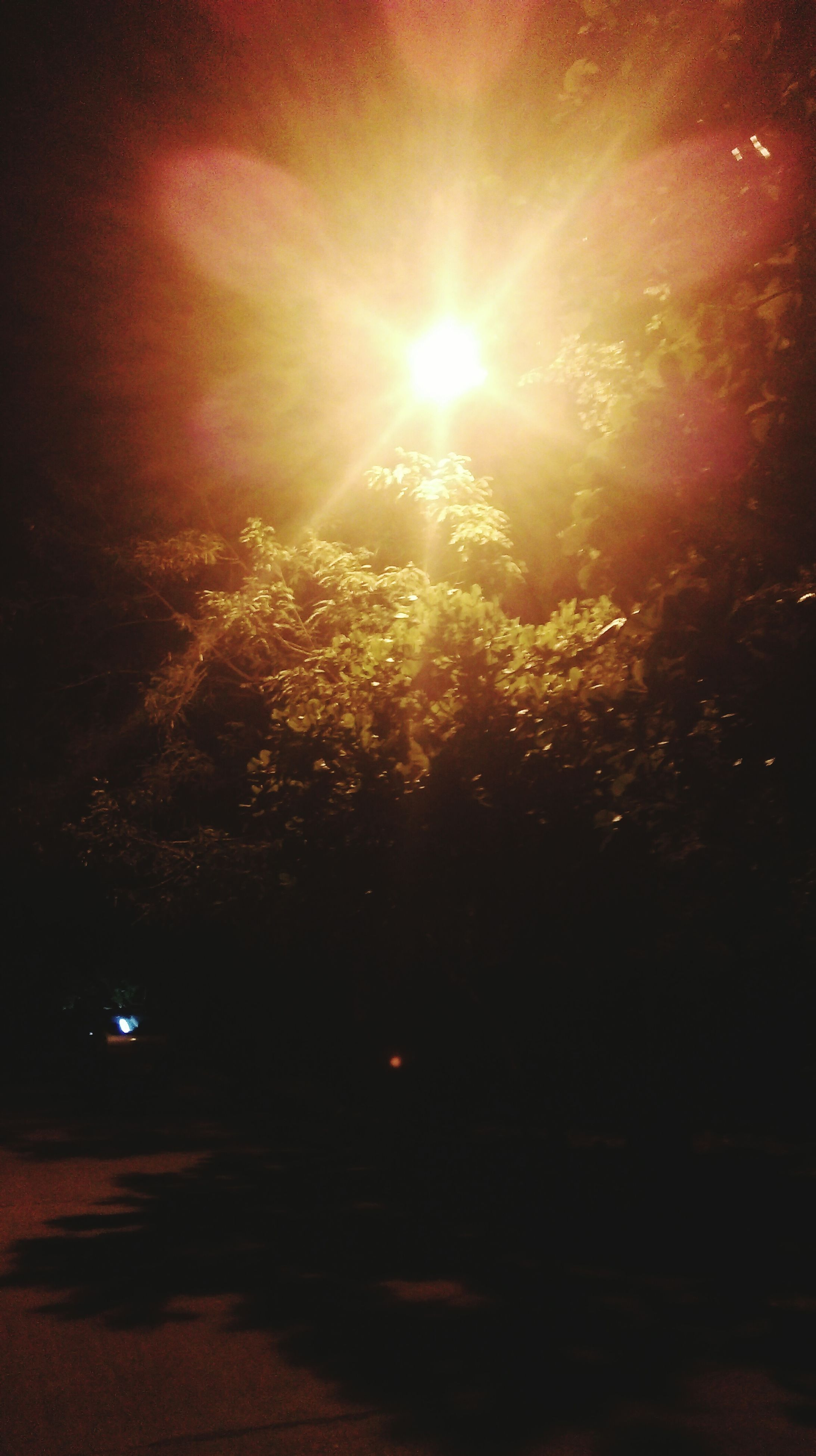 sun, lens flare, tree, sunlight, sunbeam, night, beauty in nature, tranquility, nature, low angle view, sky, illuminated, growth, glowing, scenics, bright, tranquil scene, outdoors, no people, branch
