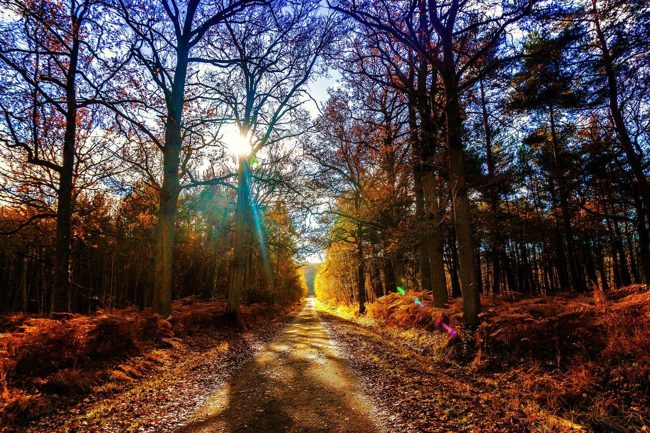 Le chemin vers l'indian summer... Tree Nature Growth Sky No People Full Frame Backgrounds Outdoors Beauty In Nature Day Scenics Multi Colored Autumn Colors Sunset Tranquility Road Road To Nowhere